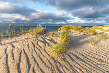 Wall Mural - Sand dunes on the beach at the North Sea coast