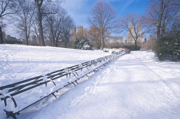 Fototapete - Park benches with snow in Central Park, Manhattan, New York City, NY after winter snowstorm