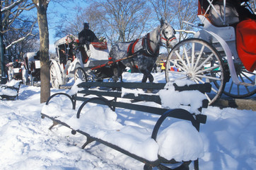 Fototapete - Horse carriage ride in Central Park, Manhattan, New York City, NY after winter snowstorm