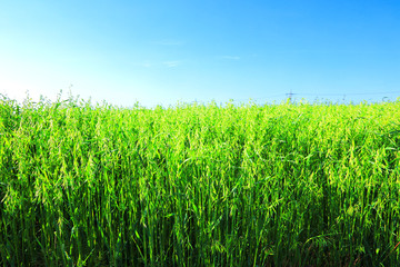 Aluminium Prints Blue 제주 농촌의 아름다운 봄 풍경이다.
