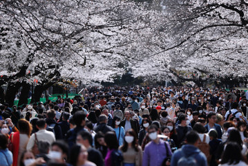 Visitors wearing protective face masks following an outbreak of the coronavirus disease (COVID-19) look at blooming cherry blossoms at Ueno park in Tokyo, Japan