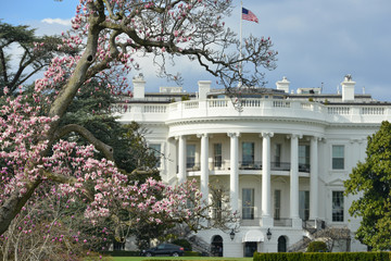 White House and spring blossoms - Washington DC in springtime Fotomurales