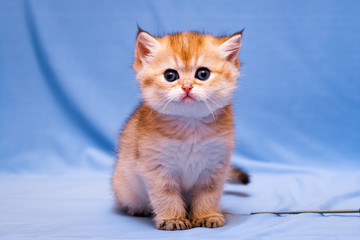 Funny kitten sits and stares at the camera