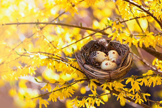 Congratulations on Easter. Bird's nest on a flowering tree. Happy easter!
