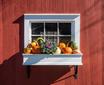 White Planter Box with Autumn Vegetables