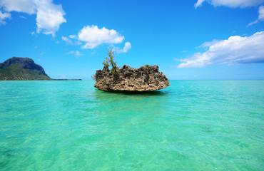 Foto auf Gartenposter Reef grun chrystal rock near Benitiers Island Mauritius, Africa
