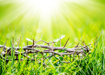 Crown of thorns in green grass at sunny day. Easter background