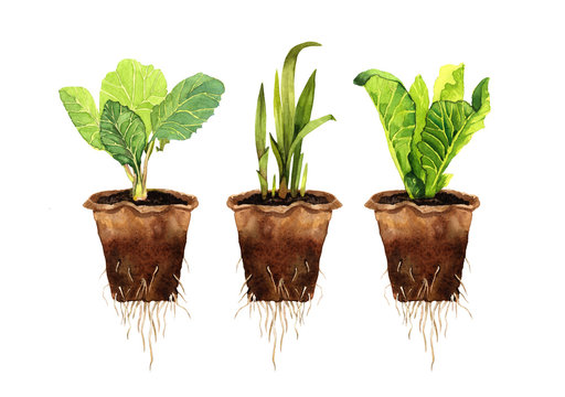 eco-friendly set of plant seedlings in a peat pot , roots of a young plant , sprouted seeds, eco- friendly sprout, hand-drawn in watercolor, isolated on a white background.