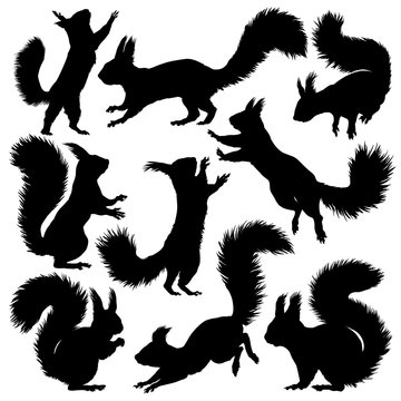 Squirrel silhouette. Set. Vector illustration isolated on white background