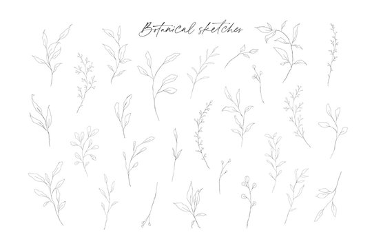 Botanical line art leaves hand drawn pencil sketches isolated on white background. Fine art floral elegant delicate graphic clipart for wedding invitation card. Vector illustration
