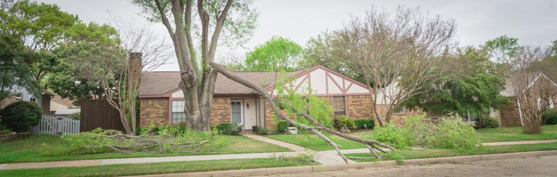 Panoramic fallen maple tree branch on sidewalk of residential house near Dallas, Texas, America