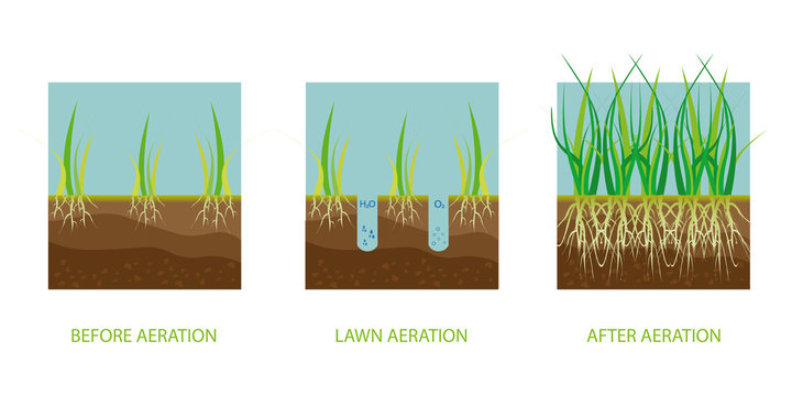 Lawn aeration. Process of aeration before and after, lawn grass care service, gardening and landscape design.  Gardening grass lawn care, landscaping service. Vector illustration