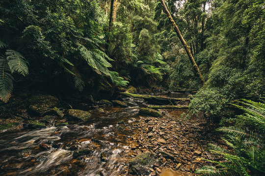 tasmanian jungle canopy floor with a running stream of water