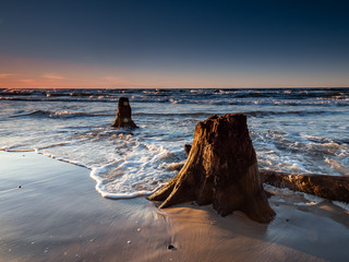 Dead trunks and trees uncovered by the sea during the sunse. Long exposure photography. Czolpino, Poland... Wall mural