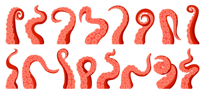 Octopus of tentacle isolated cartoon icon. Sea squid vector cartoon set icon. Vector illustration octopus of tentacle on white background .