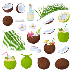 Coconut isolated cartoon set icon. Vector illustration coco on white background. Vector cartoon set icon coconut.