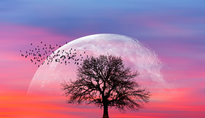 Wall Mural - Silhouette of lone tree with full moon at it largest also called supermoon