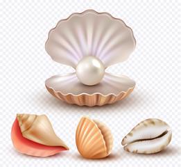 Realistic seashells. Mollusk shells ocean beach objects luxury pearls open concha vector collection. Pearl shell mollusk, ocean seashell illustration