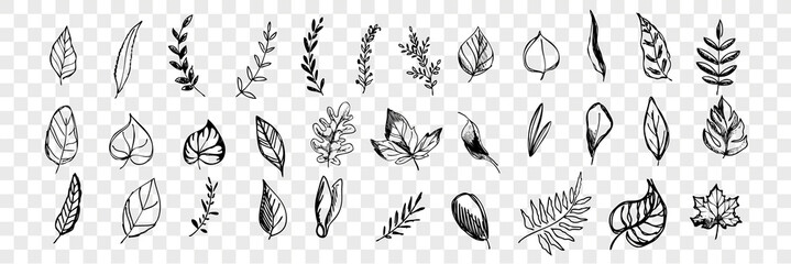 Different hand drawn tree leaves set collection