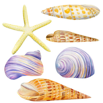 Watercolor set of seashells and starfish on an isolated white background, hand drawing, summer sea clipart