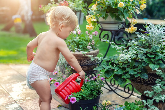 Cuate adorable caucasian blond little toddler boy in white diaper watering flower pot with red plastic can outdoors. Fun baby boy gardening plant at backyard countryside cottage on bright summer day