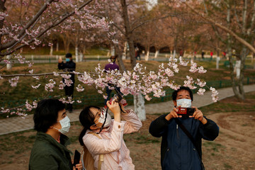 People wearing protective masks take pictures of cherry blossoms at a park, as the country is hit by an outbreak of the novel coronavirus disease (COVID-19), in Beijing