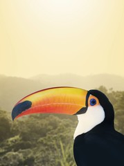 Garden Poster Toucan toucan on white background