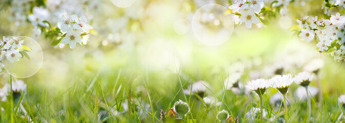 Fotoväggar - Daisies on spring meadow