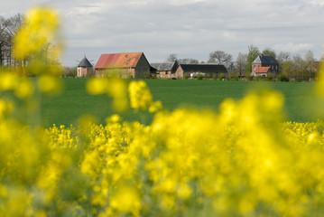 Foto auf Gartenposter Orange Champ de colza en fleur, corps de ferme en arrière plan
