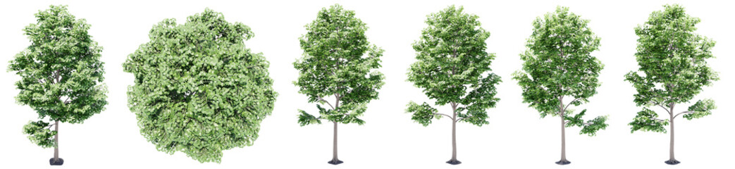 Foto auf Leinwand Olivgrun Set or collection of green maple trees isolated on white background. Concept or conceptual 3d illustration for nature, ecology and conservation, strength and endurance, force and life