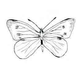 Photo sur Toile Papillons dans Grunge Hand drawn butterfly illustration, black on white background. Monochrome, textured, grunge, graphite, carbon. Isolated.