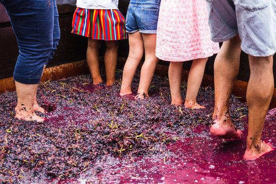 """Tourists thread with feet the wine in Madeira Wine Festival in """"Estreito de Camara de Lobos"""", Madeira island, Portugal"""
