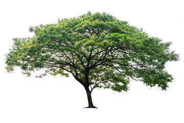 Tree isolated on white background, nature background. Fotomurales