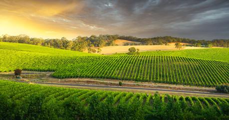 Fototapete - Vineyard Vista