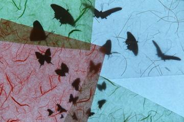Foto auf AluDibond Schmetterlinge im Grunge 蝶のシルエットと和紙のテクスチャー