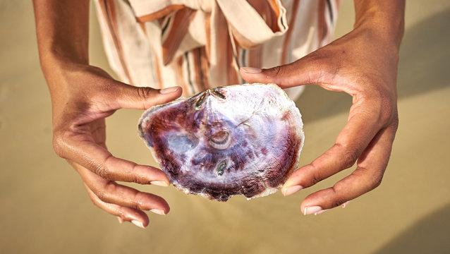 Hands holding seashell with beautiful Mother of Pearl at beach of Port Barton, Palawan, Philippines