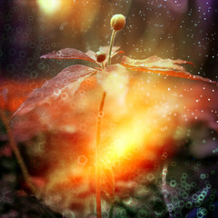 bokeh flowers field highlight magic / landscape wild flower abstract nature background at sunset macro