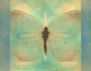 Canvas Prints Butterflies in Grunge Vintage butterfly