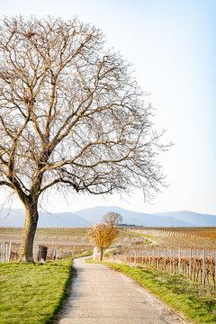Landschaft mit Weinreben und Feldweg