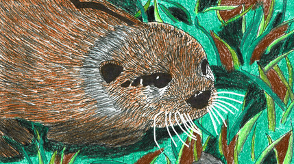 Otter Baby on a Meadow, Hand Drawn Pen and Lead Pencil Drawing