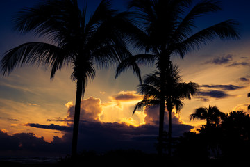 Dramatic sunset behind the silhouettes of palm trees. Puerto Plata, Dominican Republic