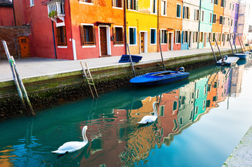 Keuken foto achterwand Venetie Two white swans floating on the canal n Burano island, Venice, Italy. Colorful architecture with reflections in the water