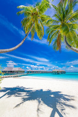 Fototapete - Tranquil tropical beach and sea in Maldives island with luxury water bungalows, villas under coconut palm tree and blue sky background. Perfect summer landscape, tropical island nature