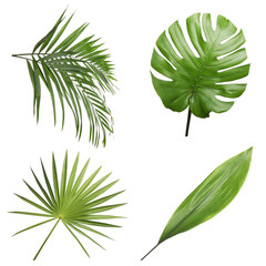 Set of different fresh tropical leaves on white background