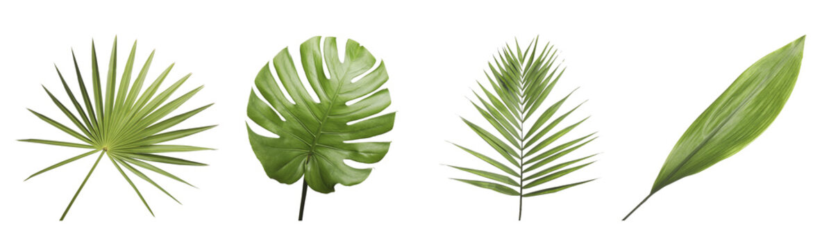 Set of different fresh tropical leaves on white background. Banner design