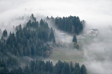fog in forest Fototapete