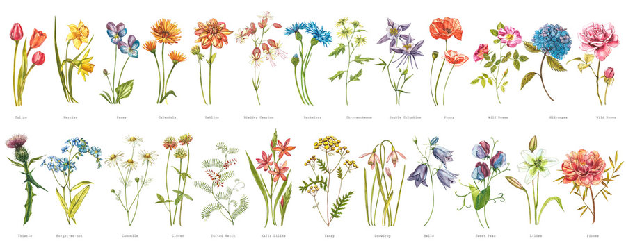 Watercolor collection of hand drawn flowers and herbs. Botanical plant illustration. Vintage medicinal herbs sketch set of ink hand drawn medical herbs and plants sketch.
