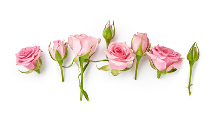 Photo sur Plexiglas Roses Rose flowers on white background. Top view of pink roses and rose buds.