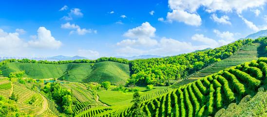 Fotorollo Lime grun Green tea mountain on a sunny day,tea plantation natural background.