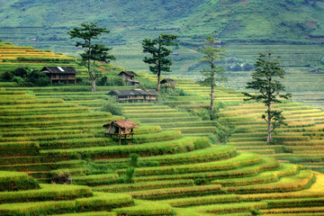 Self adhesive Wall Murals Rice fields Rice terraces in Mu cang chai,Yenbai,Veitnam.